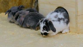Gruppe Kaninchen, die nahe weißem Bretterzaun sitzen stockbild