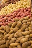 Gruppe Kartoffeln Stockbilder