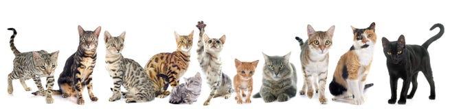 Gruppe Katzen lizenzfreies stockfoto