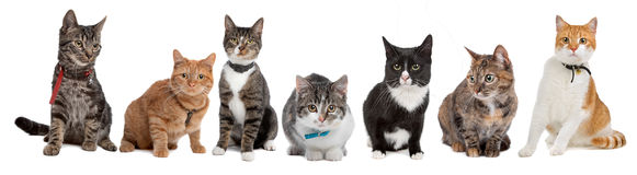 Gruppe Katzen Stockfoto