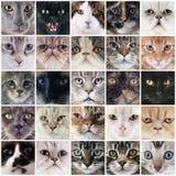 Gruppe Katzen lizenzfreie stockfotografie