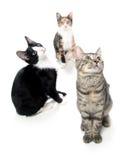 Gruppe Katzen auf Weiß Stockbilder