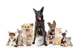 Gruppe Katzen und Hunde in der Front Betrachten der Kamera ein getrennt worden Stockfotografie