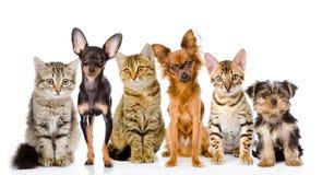 Gruppe Katzen und Hunde in der Front Betrachten der Kamera Getrennt Lizenzfreies Stockfoto