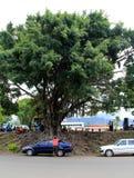 Gruppe Kirchgängern unter großem Baum Service am im Freien, Nadi, Fidschi, 2015 Lizenzfreies Stockfoto
