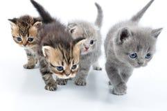 Gruppe kleine Kätzchen stockfotos