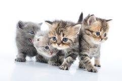 Gruppe kleine Kätzchen lizenzfreies stockfoto