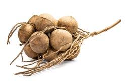 Gruppe Kokosnüsse Shell Stockbild