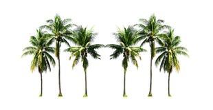 Gruppe KokosnussPalmen, die auf dem Seestrand in Phuket-Insel südlich von Thailand heranwachsen, lokalisierte auf weißem Hintergr stockfoto