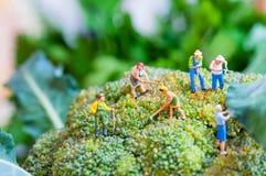 Gruppe Landwirte auf einem riesigen Blumenkohl Stockfotos