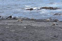 Gruppe Meeresschildkröten auf einem schwarzen Sand-Strand stockbild