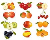 Gruppe mit verschiedenen Sortierungen der Frucht. Vektor. Stockfotos