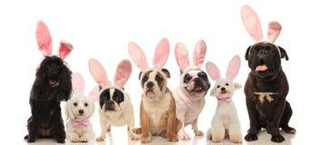 Gruppe nette Hunde, die Osterhasenohren tragen stockfotografie