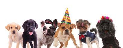 Gruppe nette Hunde, die zusammen stehen Stockbilder