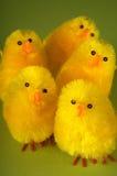 Gruppe Ostern-Vögel Stockfotos