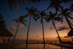 Gruppe Palmen auf Sonnenunterganghintergrund Stockfotos