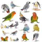 Gruppe Papageien stockfoto