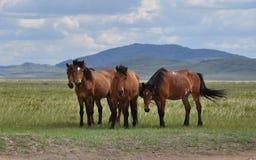 Gruppe Pferde auf einer Weide Lizenzfreie Stockfotos