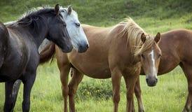 Gruppe Pferde auf Weide Stockfoto