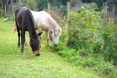 Gruppe Pferde, die Gras im grünen Bauernhof essen Stockfotografie