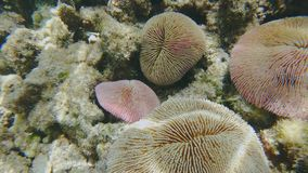 Gruppe Pilz-Korallen stock video