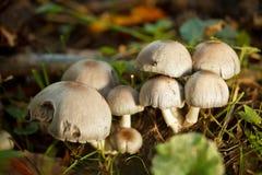 Gruppe Pilze Lizenzfreie Stockfotos