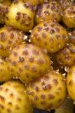 Gruppe Pilze Stockbilder