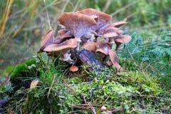 Gruppe Pilze Stockfotos