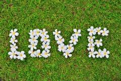 Gruppe Plumeriablumen legen in Liebesbriefe auf den Grashintergrund Stockfotografie