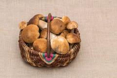 Gruppe porcini Pilze auf Leinen Steinpilzpilze im Korb Lizenzfreie Stockfotos