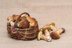 Gruppe porcini Pilze auf Leinen Steinpilzpilze im Korb Lizenzfreie Stockbilder