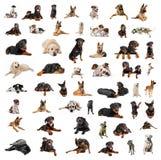Gruppe reinrassige Hunde lizenzfreies stockbild
