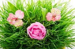 Gruppe rosa Blumen Stockfotografie