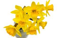 Gruppe schöne Narzissenblumen lokalisiert gegen Weiß Lizenzfreies Stockfoto