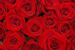 Gruppe schöne rote Rosen Stockfotos