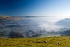 Gruppe Schafe, die Gras auf einem Hügel weiden lassen Stockbilder