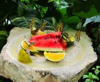 Gruppe Schmetterlinge Lizenzfreie Stockfotos