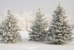Gruppe Schnee bedeckte Evergreens mit weißen bedeckten Bäumen im Hintergrund und in der Schneebodendecke im Winter stockfotografie