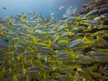 Gruppe schwimmende Fische Lizenzfreies Stockbild