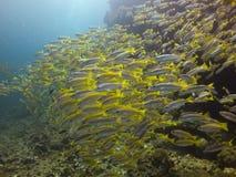 Gruppe schwimmende Fische stockbild