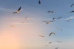 Gruppe Seemöwen, die in den blauen Himmel fliegen Lizenzfreie Stockfotografie