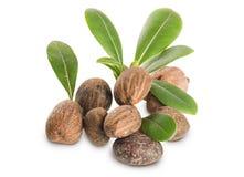 Gruppe Shea Nuts und Blätter Stockfotografie