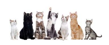 Gruppe sitzende Katzen, die oben schauen Stockbilder