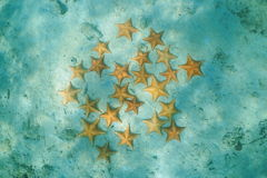 Gruppe Starfish Unterwasser auf sandigem Meeresgrund stockbilder