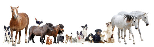Gruppe Tiere lizenzfreie stockfotografie