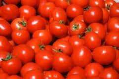 Gruppe Tomaten Lizenzfreies Stockfoto