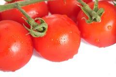 Gruppe Tomaten auf dem weißen Hintergrund Stockfoto