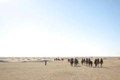 Gruppe Touristen auf Kamelen Stockfoto