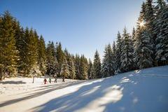 Gruppe Touristen, die in Winterwald mit Schnee gehen, bedeckte Stift stockfotografie