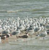 Gruppe Vögel Lizenzfreies Stockfoto